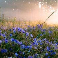 туман в лесу :: Василий И