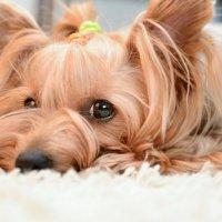 Только в собачьем взгляде видна одна искренность :: Екатерина Гриб