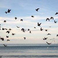 Птичий переполох :: Нина Бутко