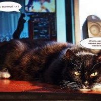 Когда коты про кошек забывают... :: Александр Резуненко