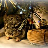 Когда снится Дед Мороз... :: Кай-8 (Ярослав) Забелин