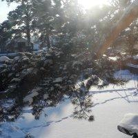 Следы на снегу :: Олег Афанасьевич Сергеев
