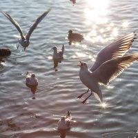 Птицы :: Светлана Щербакова