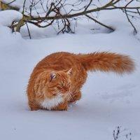 И  снег  и  мороз  не  страшен  Васе. :: Валера39 Василевский.