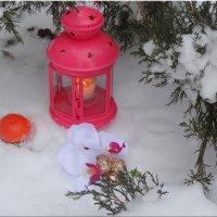 Зимнее настроение... :: Тамара (st.tamara)