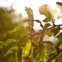 Лучи солнца :: Ксения Лабуш