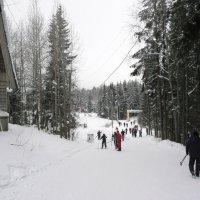 На лыжню :: Виктор