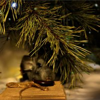Засада на Деда Мороза... :: Кай-8 (Ярослав) Забелин