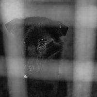 Человек собаке друг? :: Ольга Лапшина
