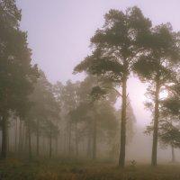сиреневый туман :: Василий И