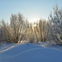 Сугробы... Солнце... Северодвинск. :: Михаил Поскотинов