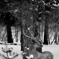 В январе в морозный зимний день жестяной привиделся олень.. :: NICKIII Михаил Г.
