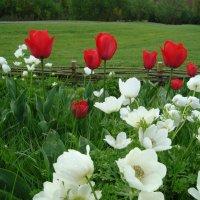 Весна :: Irina Fay