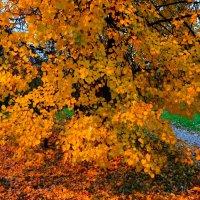 Янтарная осень :: Анастасия Макарова