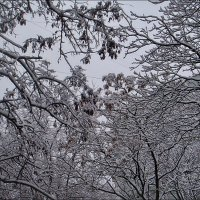 Снежные кружева :: Нина Корешкова