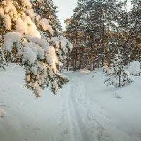 По лыжне... :: Saloed Sidorov-Kassil