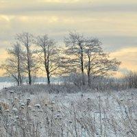 Зимнее утро :: Николай Танаев