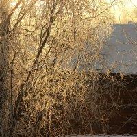морозное утро :: Марина Мякошина