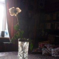 В закатном луче... :: Татьяна Юрасова