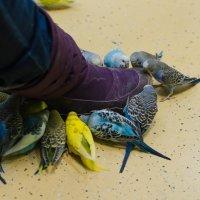 Нападение попугаев!!!)) :: Ольга Егорова