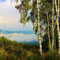 Утренний пейзаж с берёзами :: Сергей Чиняев