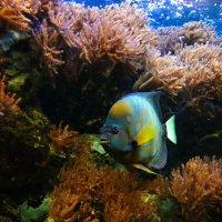 Подводный мир :: Alexander Andronik