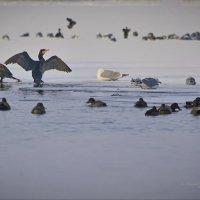 морозное утро на реке :: Александр Лонский