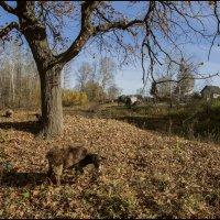 Осень в деревне :: Алексей Патлах