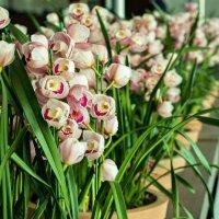 orchid :: Tatyana Belova