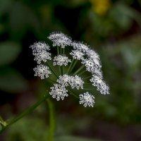 скромныецветочки :: gribushko грибушко Николай