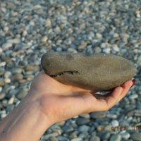 камень акула :: nikolai meleshko