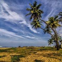 on the Indian Ocean :: Dmitry Ozersky