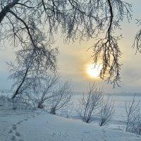 Зимнее солнце в ветвях дерева. :: Марина Никулина