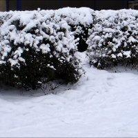 Снежные шапки :: Нина Корешкова