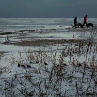 Холод :: Анатолий Шулков