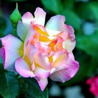 Цветы :: Vladimir Lisunov