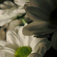 Цветы. :: Ksy Tsyganova