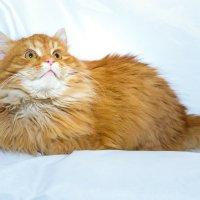 Моделька котейка :: Екатерина Гриб