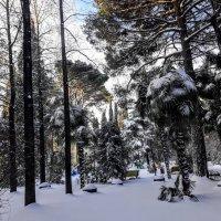 Зима :: Tata Wolf