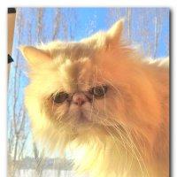 Солнечный кот. :: Чария Зоя