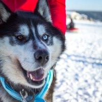 Собака-улыбака :: Наталия Ремизова