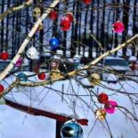 Новогодняя берёзка. :: Михаил Столяров