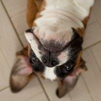 Собака-забияка. :: Ольга