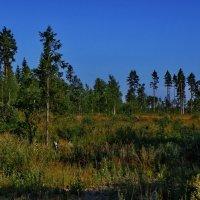 Опушка леса... :: Владимир Ильич Батарин