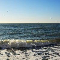 Море...Волна...Чайки... :: Дмитрий Петренко