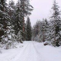 Поет зима аукает, мохнатый лес баюкает... :: Павлова Татьяна Павлова