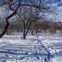 зимний сад :: юрий иванов