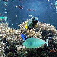 Здравствуйте подводные  жители ! :: Виталий Селиванов