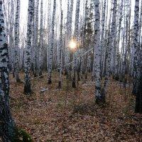 """""""Солнце в лесу"""" :: Оксана Волченкова"""