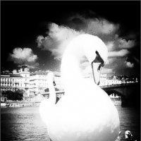 Белый лебедь из Праги :: Jiří Valiska